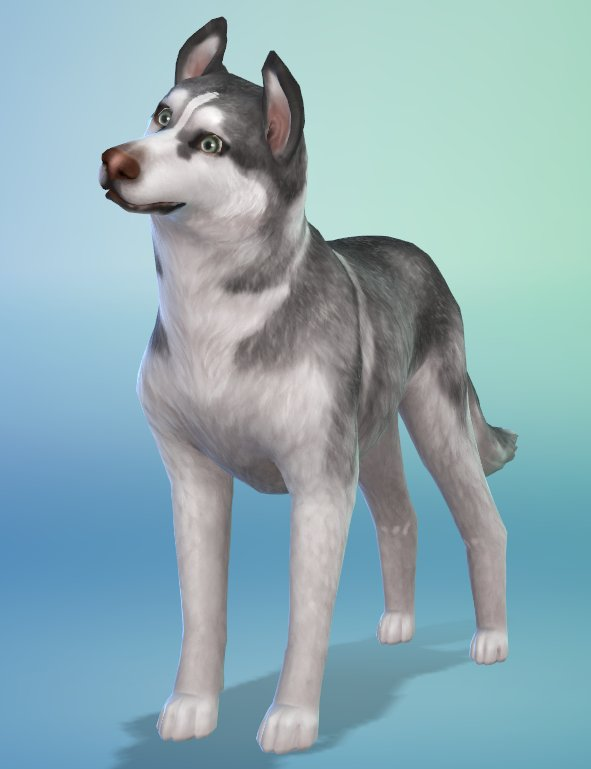 Les_sims_4_chiens_chats - Next Stage