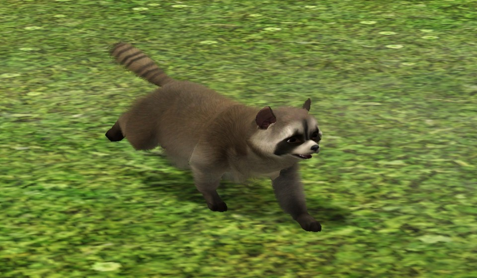 Sims  Cats And Dogs Raccoons